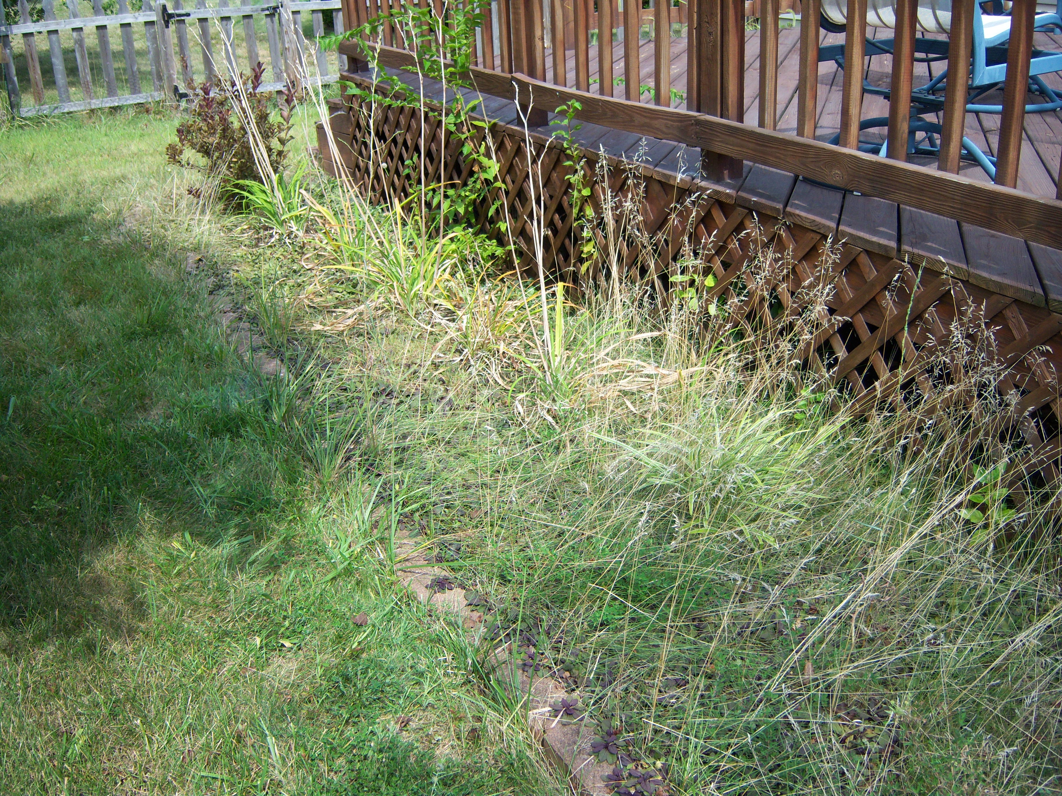 Weeds flower beds - Overgrown Overgrown Apparently Flower Beds